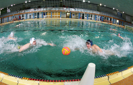 Foto vom Anschwimmen: SG Wasserball Dresden gegen SVV Plauen